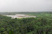 foto of rainforest  - Rainforest - JPG