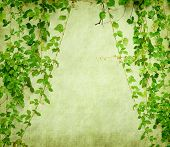 foto of ivy  - green ivy on old grunge antique paper texture - JPG