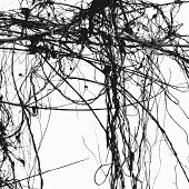 stock photo of ivy  - Wild ivy stems and bare branches silhouette - JPG