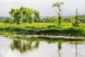 image of wetland  - Gyeongpo lake park with the restored wetlands reflecting on the small river running nearby the lake - JPG