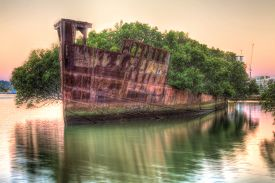 picture of collier  - Historic Shipwreck at dawn in Homebush Bay - JPG