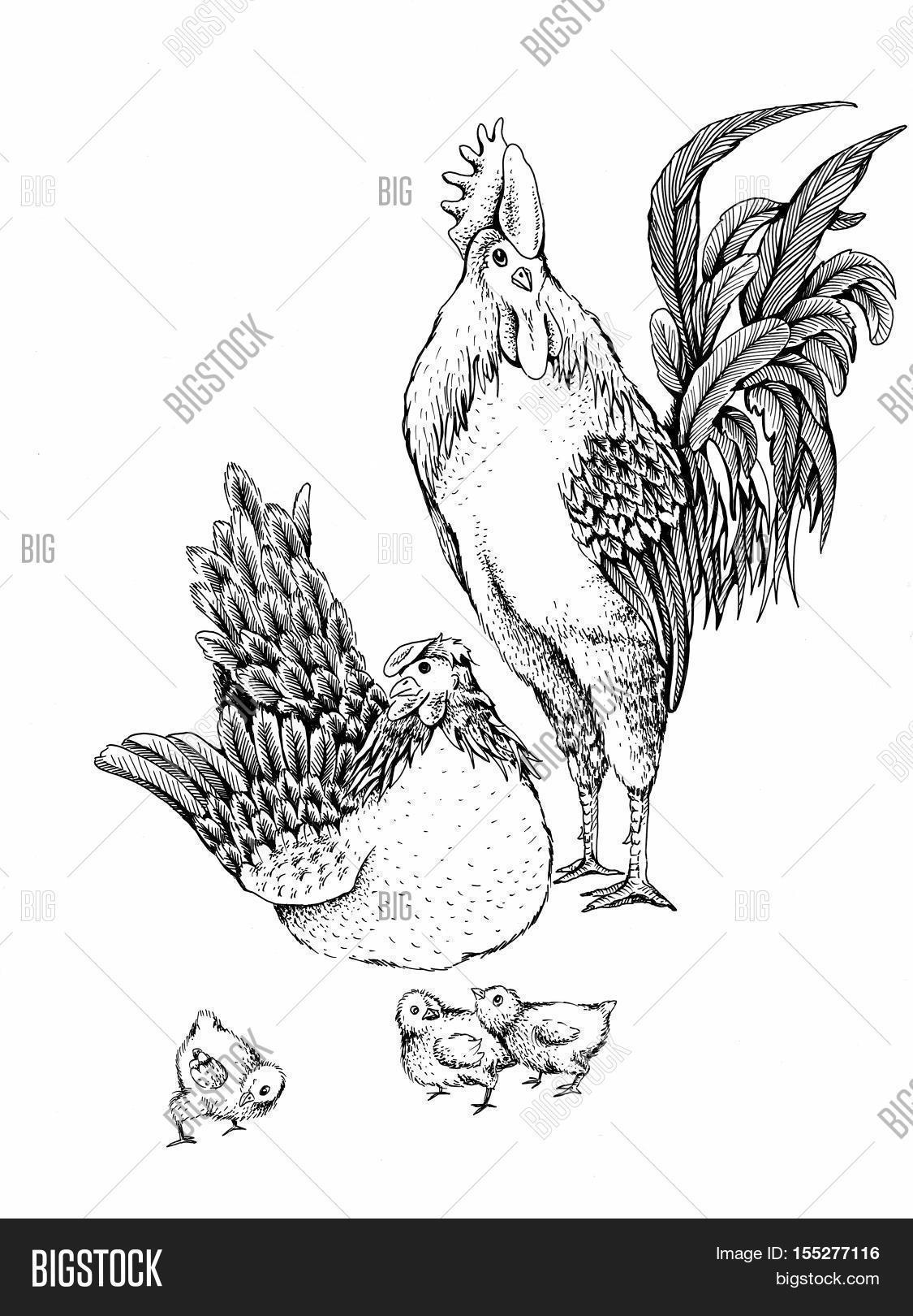 Illustration Rooster Hen Series Image  Photo  Bigstock