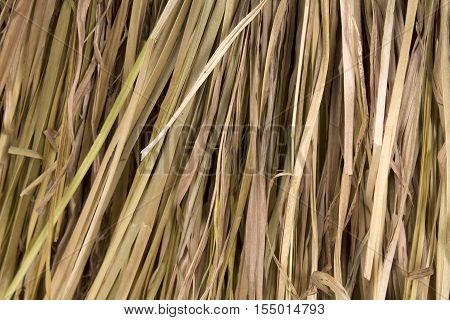 Background of dry reeds. The roof close-up
