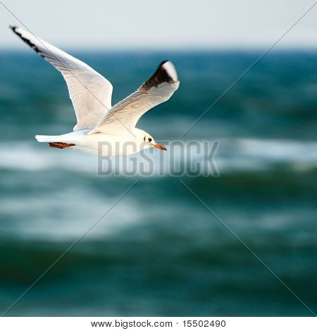sea gull on background sky