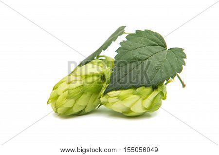 hop agriculture, green, ferment isolated on white