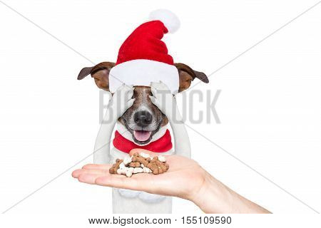 Santa Claus Excited And Surprised Dog