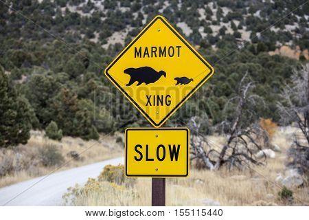 Marmot crossing wildlife caution sign on mountain road.