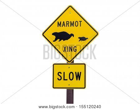 Marmot crossing wildlife caution sign isolated on white.