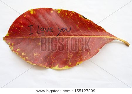 i love you feeling message card and red dried leave in autumn on background white