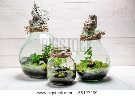 Beautiful Jar With Live Forest, Save The Earth Concept