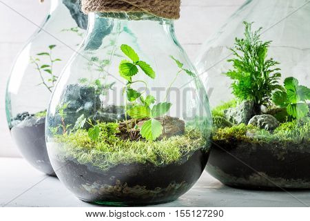 Beautiful Live Plants In A Jar, Save The Earth Idea