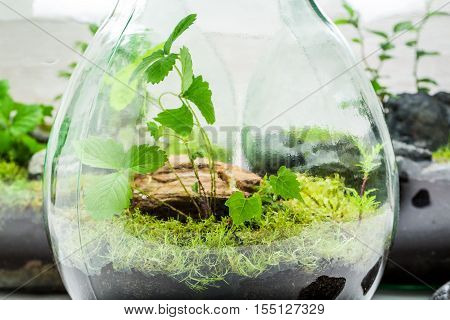 Stunning Jar With Piece Of Forest With Self Ecosystem
