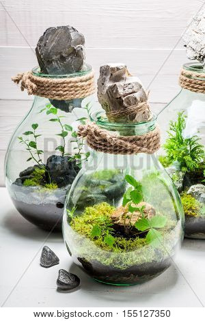 Beautiful Live Plants In A Jar With Self Ecosystem