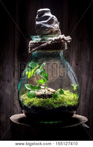 Wonderful Jar With Piece Of Forest, Save The Earth Idea