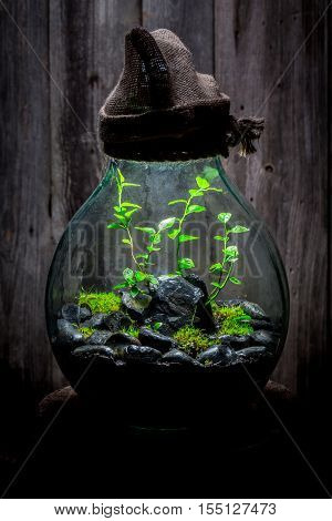 Amazing Jar With Live Forest, Save The Earth Idea