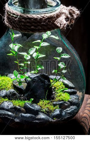 Beautiful Jar With Live Forest As New Life Concept