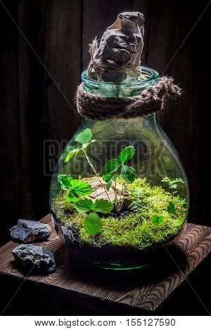 Amazing Live Plants In A Jar With Self Ecosystem