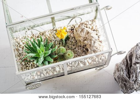 Wonderful Terrarium With Live Cactus And Self Ecosystem