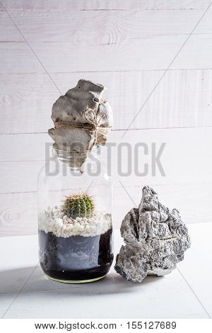 Live Cactus In A Jar As Self Ecosystem