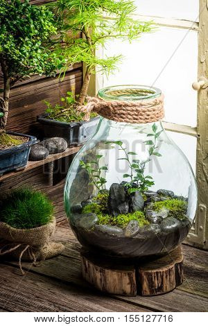 Small Jar With Piece Of Forest With Self Ecosystem