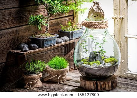 Wonderful Rain Forest In A Jar With Self Ecosystem