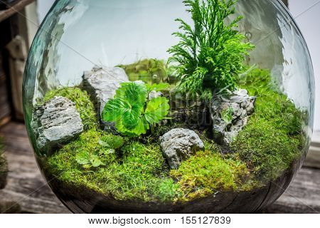 Wonderful Jar With Piece Of Forest As New Life Concept