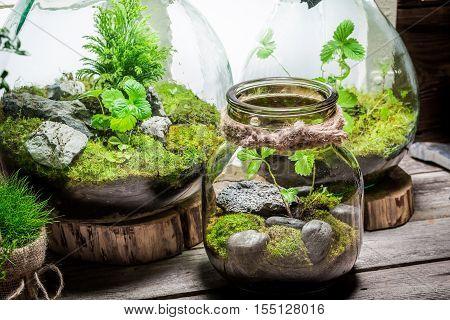Stunning Rain Forest In A Jar, Save The Earth Idea