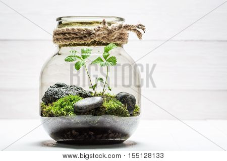 Amazing Jar With Piece Of Forest As New Life Concept