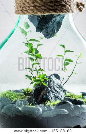 Wonderful Jar With Live Forest, Save The Earth Concept