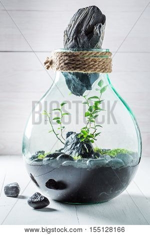 Stunning Jar With Live Forest As New Life Concept