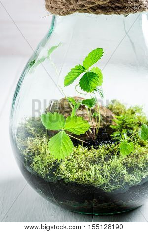 Amazing Live Plants In A Jar As New Life Concept