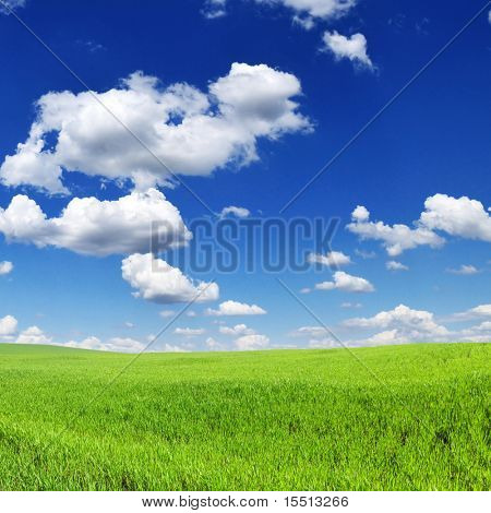 Green spring meadow and the beautiful blue sky