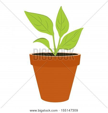 Plant Growing Vector