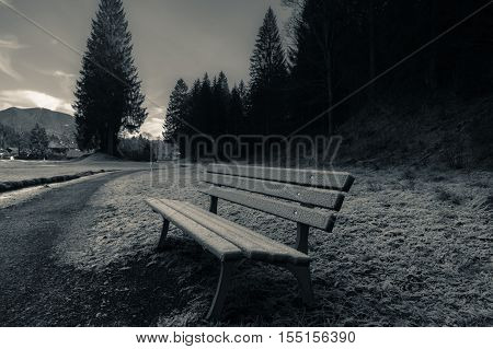 Outdoor bench and frozen grass - Wooden bench on the side of an alley near the forest covered by December frost in Ehrwald Austria
