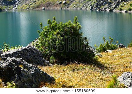Nature, landscape, mountain landscape, pasur, rocks, summer, stones, mountain, rock, scree, types, Kazakhstan, ridges, plants, trees, cedar, pine pine, pine tree, flora