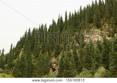 Nature, landscape, mountain landscape, pasur, rocks, summer, stones, mountain, rock, scree, Kyrgyzstan, ridges, plants, trees, flora