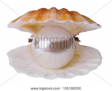 Giant pearl in shell isolated on white