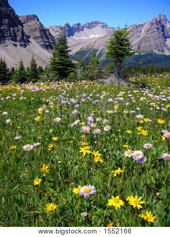 Dolomite Peak From Molar Meadows, Banff National Park, Canada