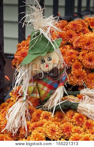 Autumn Scarecrow In Mums
