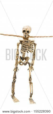 skeleton helloween collection isolated on white background