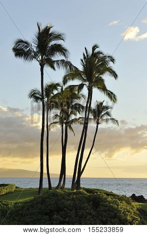 Sunset with palm trees on the island of Maui, Hawaii