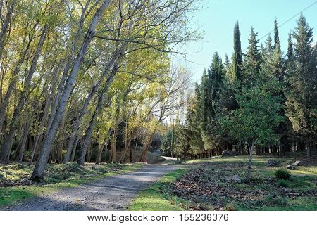 mixed forest crossed by dirt road in Nebrodi Park, Sicily