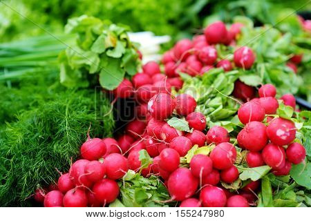 Bunches Of Radish Sold On Farmer's Market