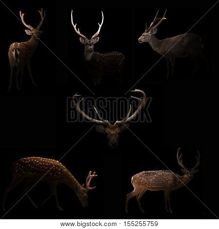 Male Deer Hiding In The Dark