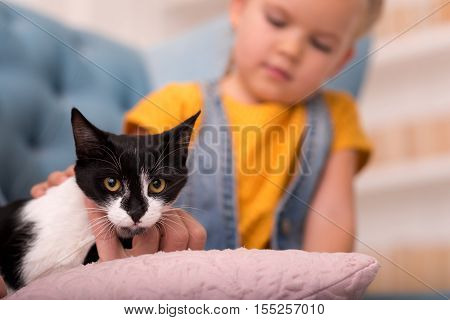 Fixed gaze. Selective focus of a cute nice black and white cat looking at you while being stroked by a small adorable blonde girl