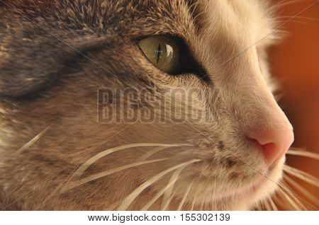 Portrait of a cat. Wild eyes and long whiskers.
