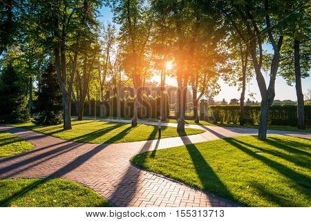 Trees in the park. Nature and sunlight. Quiet place outside the town. Warm summer morning.