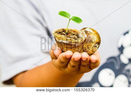 Child Hand Holding Crust Shellfish