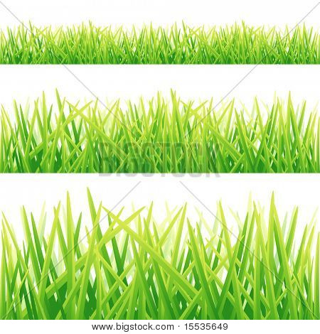 A Collection of Fresh green grass lines. Vector illustration