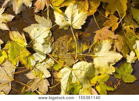 Top View Of A Wet Autumn Leaves